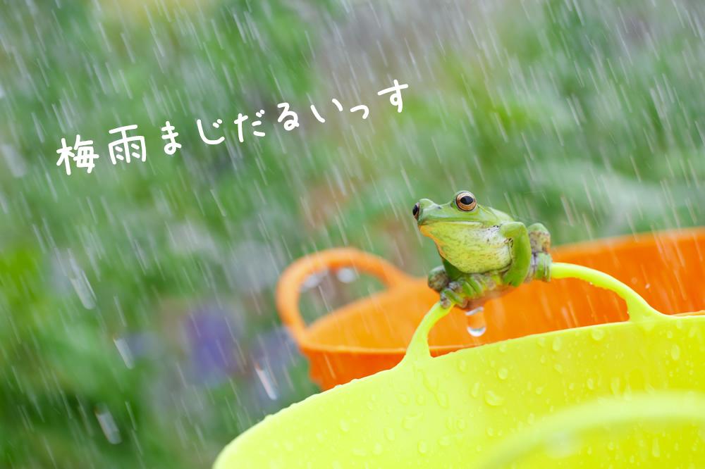 梅雨について天然パーマが調べたこと